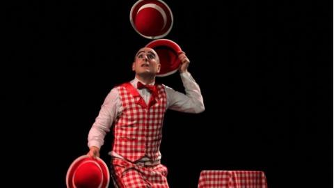 Stupor Circus